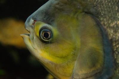 Green fish eye Nikon 602