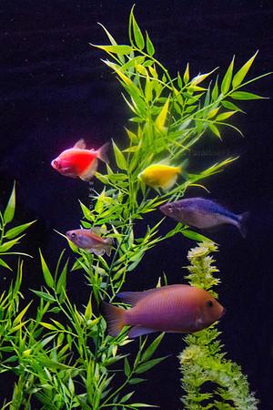 Fish   nikon 3634