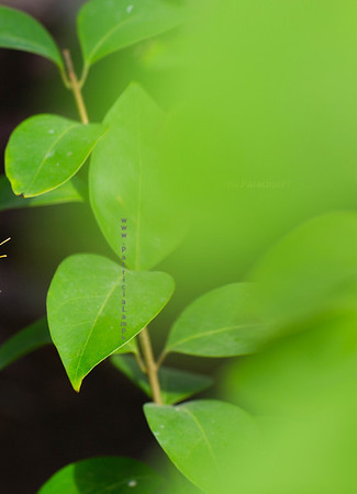 green leaf  smeared background 9730