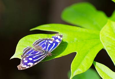 Purple butterfly 9604