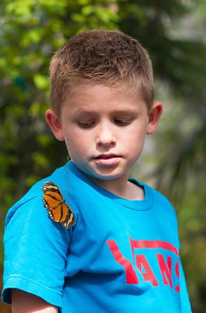 Butterfly on boy's shirt 9704