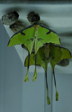 Green bats  Nikon 3647