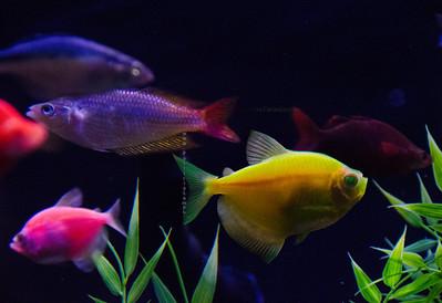 yellow & other fish  nikon 3620
