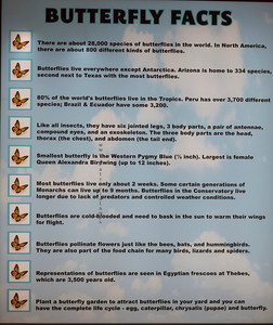 Butterfly facts 9503