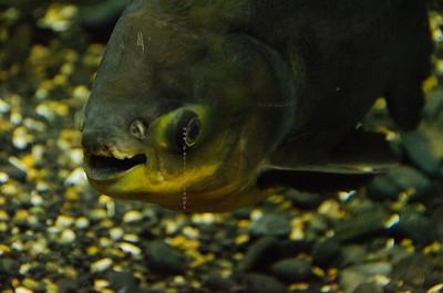 talking big green fish3625
