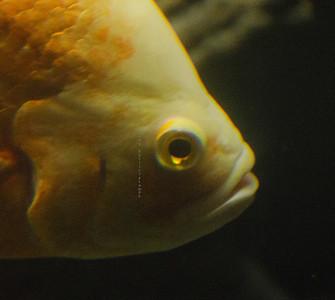 Orange fish eye Nikon 3608