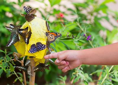 girls hand point 2 sev butterflies 9690