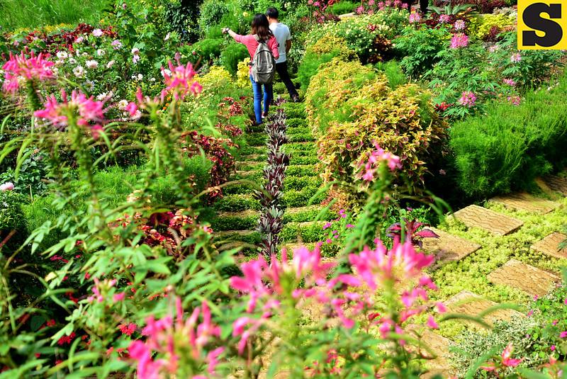 Guests  wandering at the beautiful garden, a new attraction in Brgy. Gaas, Balamban. They call this place Buwakan ni Alejandra.<br /> photo Allan Cuizon