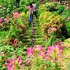 Guests  wandering at the beautiful garden, a new attraction in Brgy. Gaas, Balamban. They call this place Buwakan ni Alejandra.<br /> photo Allan Cuizon