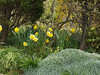 Spring Flowers in Eyam