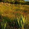 Wildflowers, Brownwood, TX