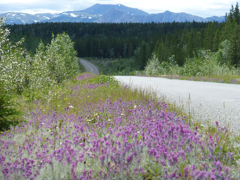 Cassiar Highway north from Dease Lake.