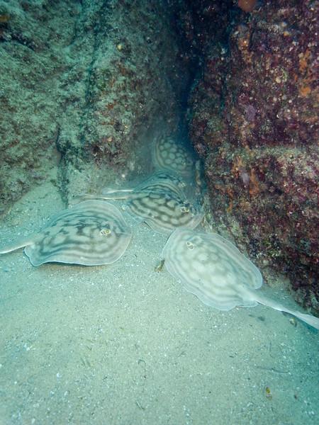 Pelican Rocks - Cabo San Lucas
