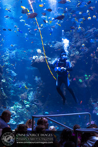 Scuba Diver at CAL Academy of Sciences talks with vistors from inside the aquarium.