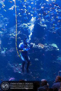 Scuba Diver at CAL Academy of Sciences talks with vistors from inside the aquarium.