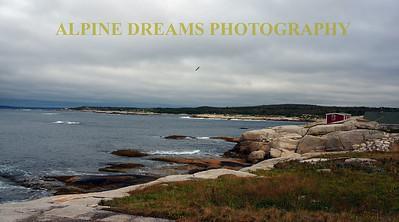 BIRD AND BREAKERS IN PEGGYS COVE