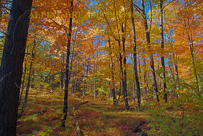 WOODS IN FALL