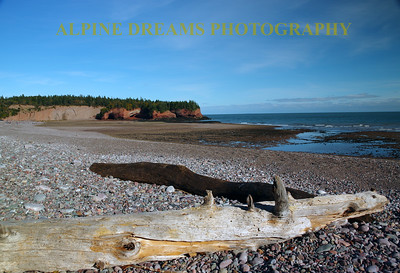 DRIFTWOOD AND BAY OF FUNDY