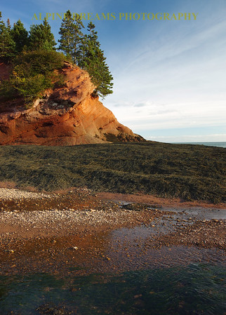 COLORFUL FUNDY