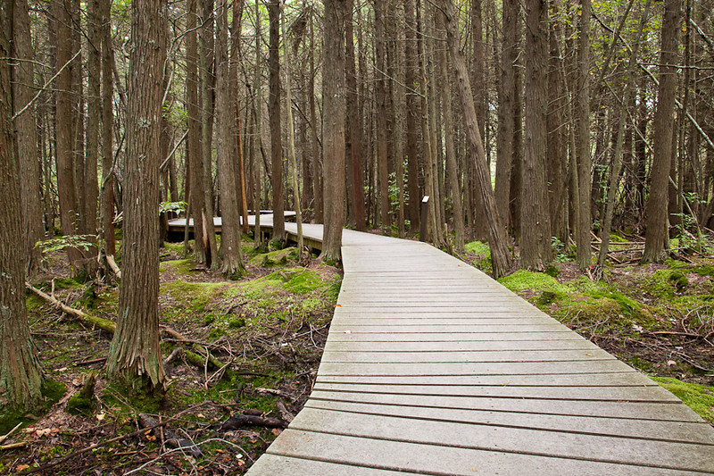 BOARDWALK AT CEDAR SWAMP