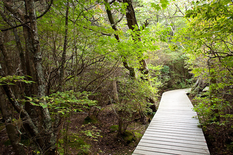 ATLANTIC WHITE CEDAR SWAMP-WELLFLEET<br /> CAPE COD NATIONAL SEASHORE