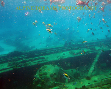 BARBADOS WRECKS AND FISH