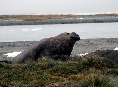 Patagonia - Ainsworth Bay and elephant seal colony