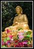 Budda and lotus blossoms...