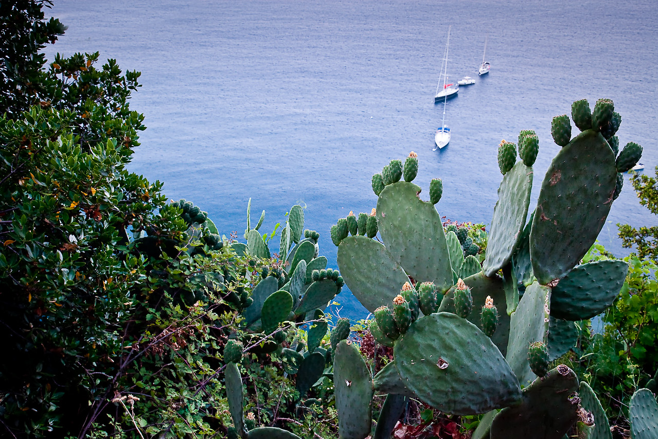PRICKLY PEAR CACTUS AND BOATS-VERNAZZA
