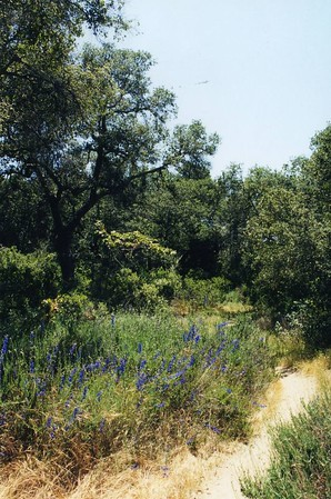 CLEVELAND NATIONAL FOREST (San Juan Loop Trail): Trips