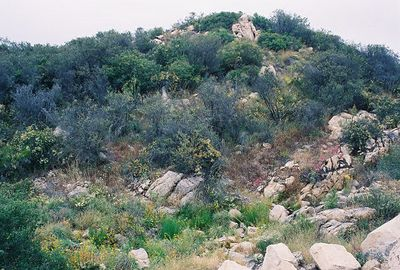 6/5/05 Forest Service Rd @end of Tenaja Rd. Riverside & San Diego County Lines.