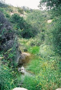 6/5/05 Forest Service Rd @end of Tenaja Rd. Riverside & San Diego County Lines