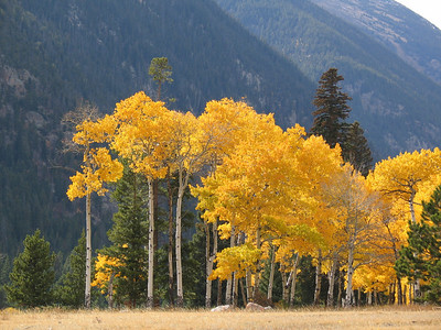 Fall in Estes Park Colorado
