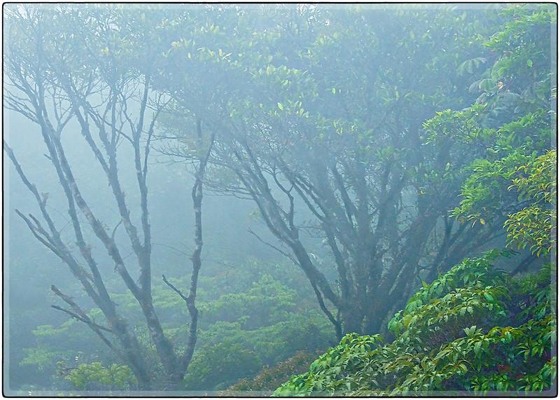 Monte Verde Rain Forest