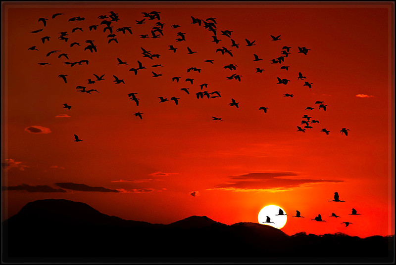 Birds at Sunset : Rancho Solimar