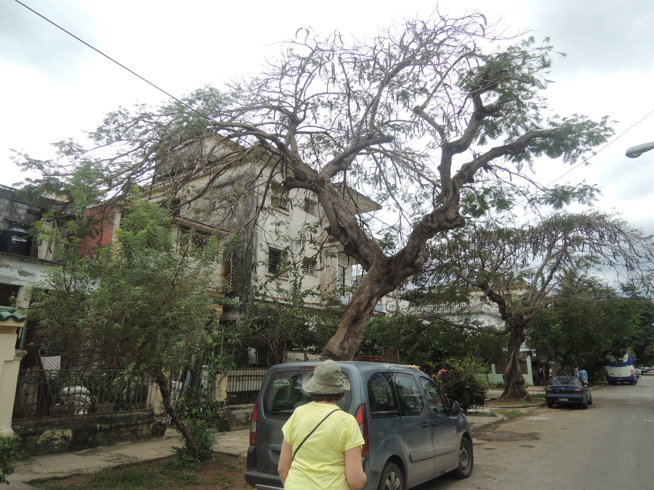 Some wonderful trees on the street near our restaurant.  Some of the houses were being renovated.  Kathleen heads over the check it out