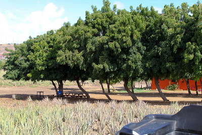 Aloe Vera Farm - ATV Tour - Curacao