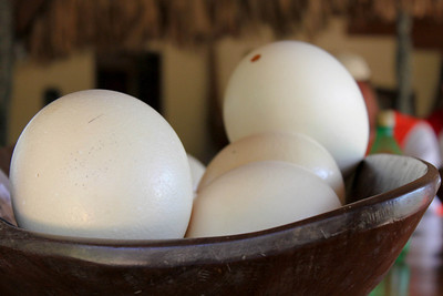 Eggs at the Ostrich Farm - Curacao