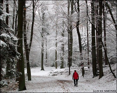 """A WHITE SURPRISE"", Czech Paradise area, Czech Republic."