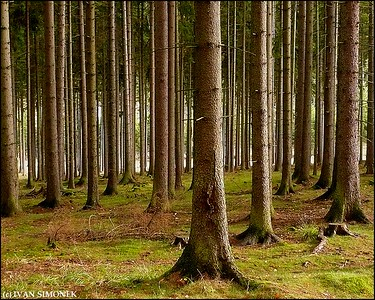 """BRDY FOREST"", Czech Republic."