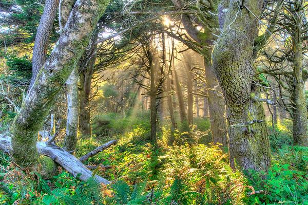 Cabin on Southern Oregon Coast