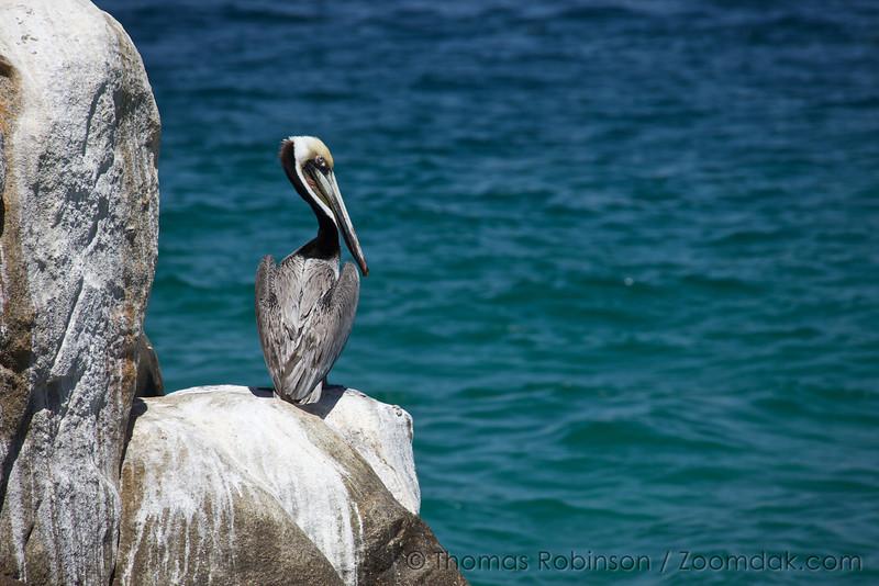 A pelican contemplates the bay near Land's End in Cabo San Lucas, Mexico.