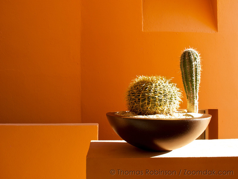 A slice of Mexican lifestyle. Cactus, sun, and orange deco.