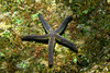 A pyramid sea star (Pharia pyramidata) on a garden of algae in the Sea of Cortez, Cabo Pulmo National Marine Park.