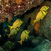 Snapper - Dive 12 of 12 - Pedregal Norte