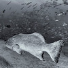 Grouper - Dive 11 of 12 - Los Morros