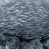 School of Fish - Dive 12 of 12 - Pedregal Norte