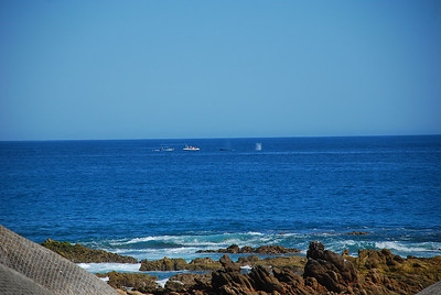 Whale watchers off the coast of Fiesta Americana Hotel and Resort, Cabo San Lucas Mexico