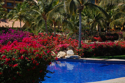 Pool and bouganvilla at Fiesta Americana Hotel and Resort, Cabo San Lucas Mexico