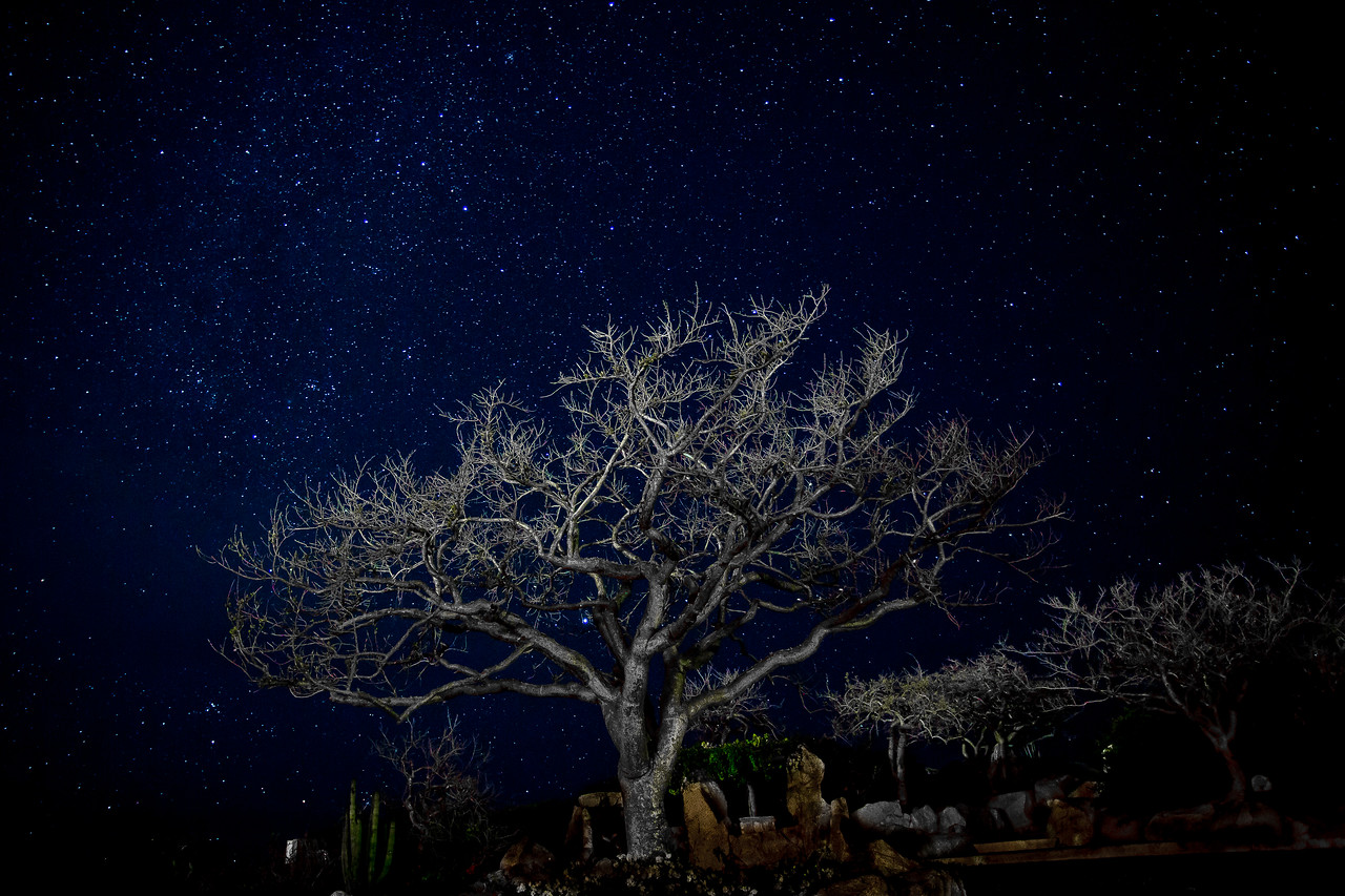 ghost tree in the milky way
